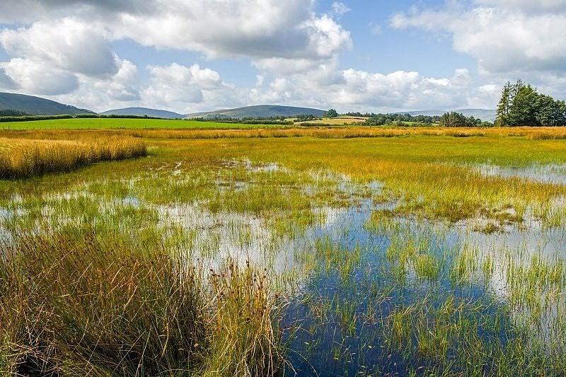 Pond on Mynydd Illtyd Common