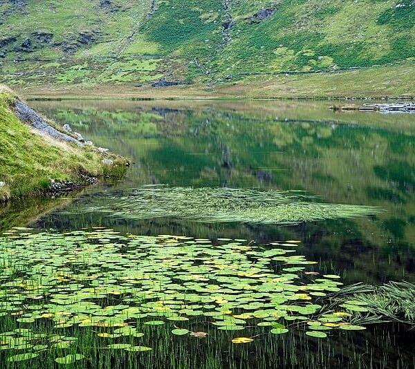 Llyn Cwm Orthin Snpwdonia