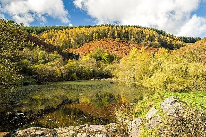 The Upper Pond at Clydach Vale in Autumn