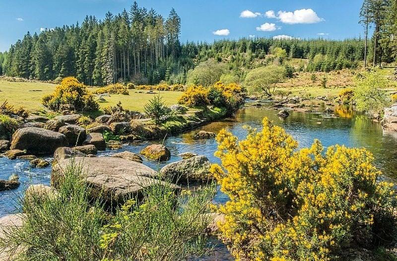 East Dart River at Bellever Dartmoor