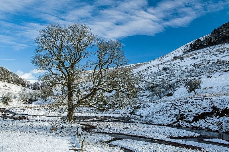 The guardian tree at Cwm Crew Brecon Beacons