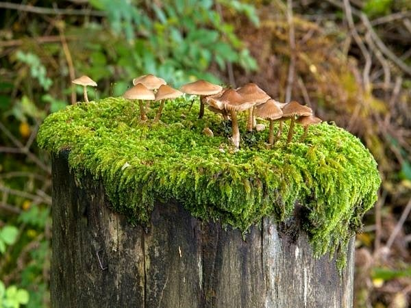 Toadstools growing on a fencepost top