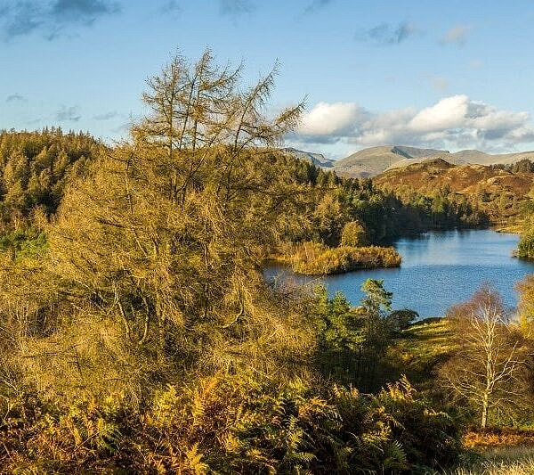 View across Tarn Hows Lake District