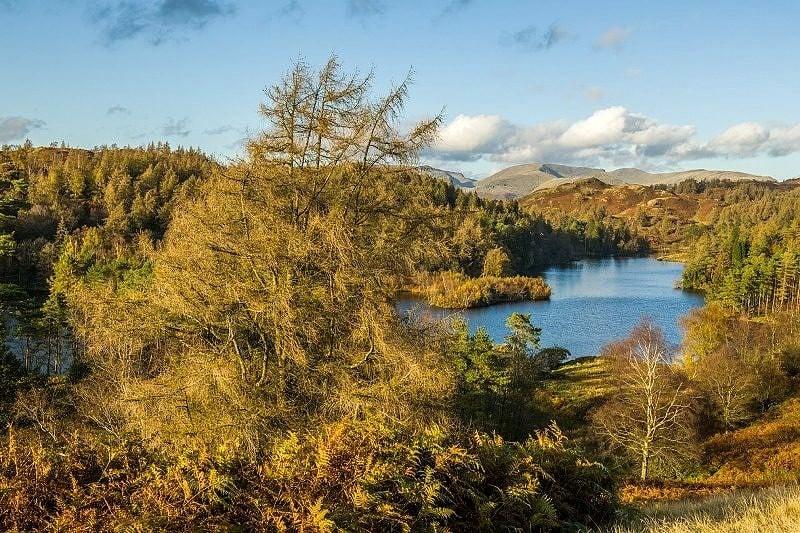 View across Tarn Hows Lake District