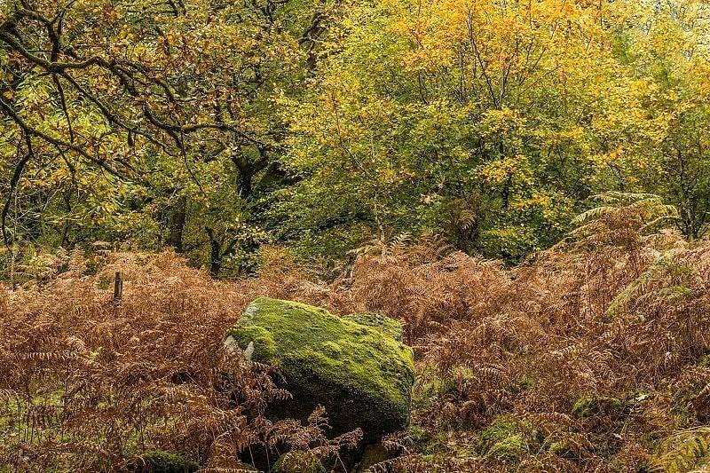 Autumn Woods Burrator Reservoir Dartmoor