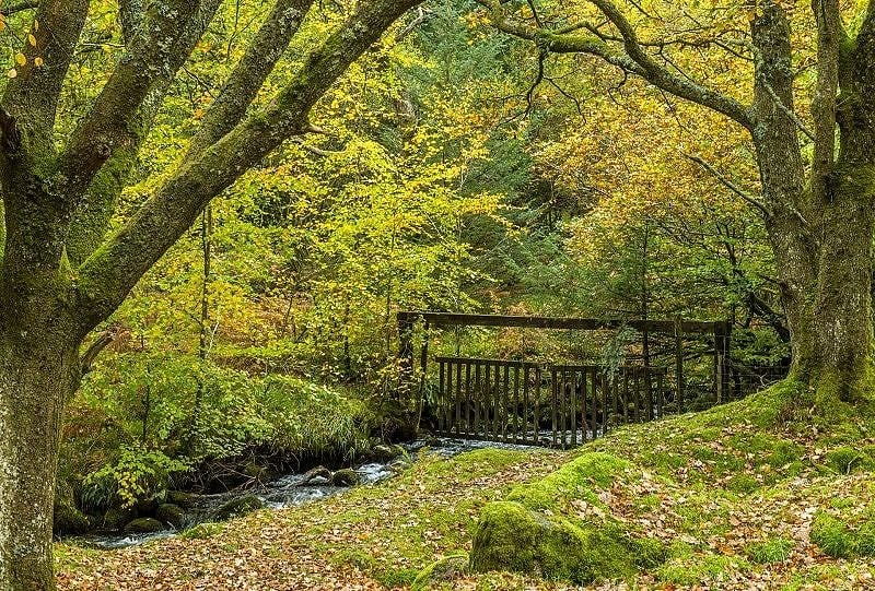 Woodland at Burrator Reservoir on Dartmoor