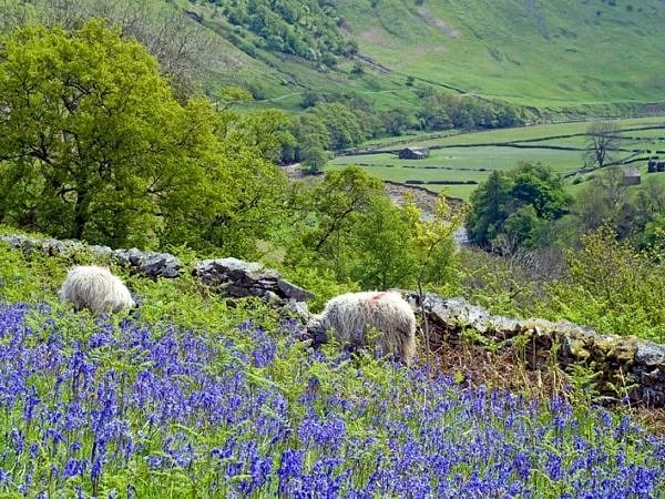 Looking down Swaledale in Spring